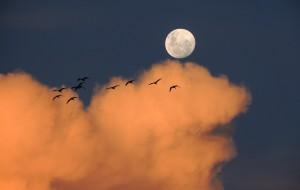 Todo Sobre el Arcano La Luna 300x190 Todo Sobre el Arcano La Luna