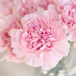 Las flores y gemas que potencian al signo Virgo