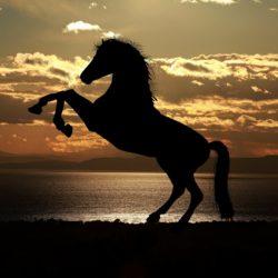 Qué animal es cada signo del zodiaco