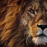 Signos del zodiaco animales